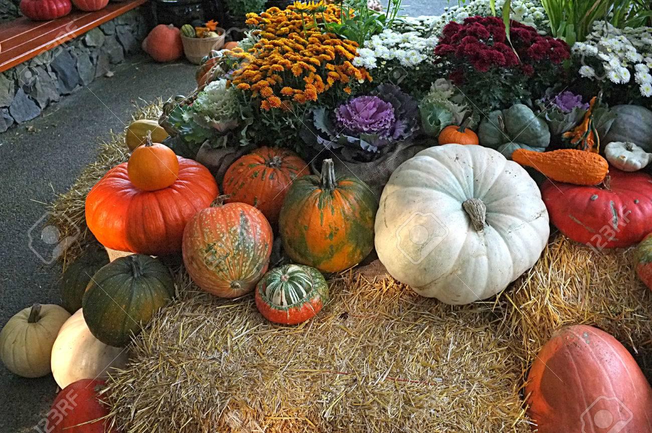 photo of pumpkin winter squash crop harvest displayed in garden