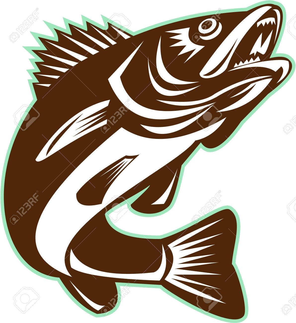 Illustration of a Walleye (Sander vitreus, formerly Stizostedion vitreum), a freshwater perciform fish jumping up on isolated background done in retro style. Stock Vector - 55296151