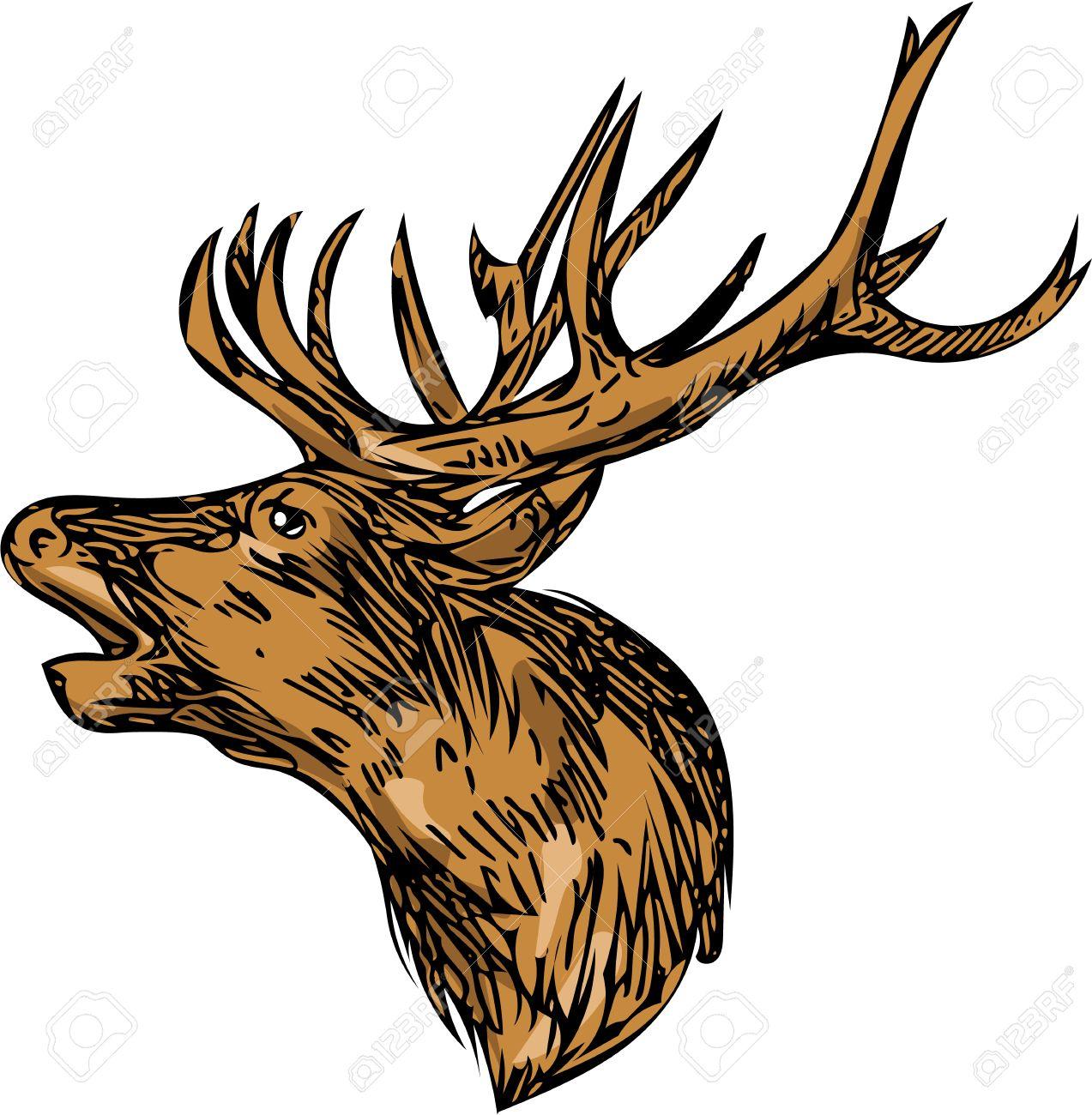 Dessin Croquis Illustration De Style D Un Cerf Cerf Tête De Mâle