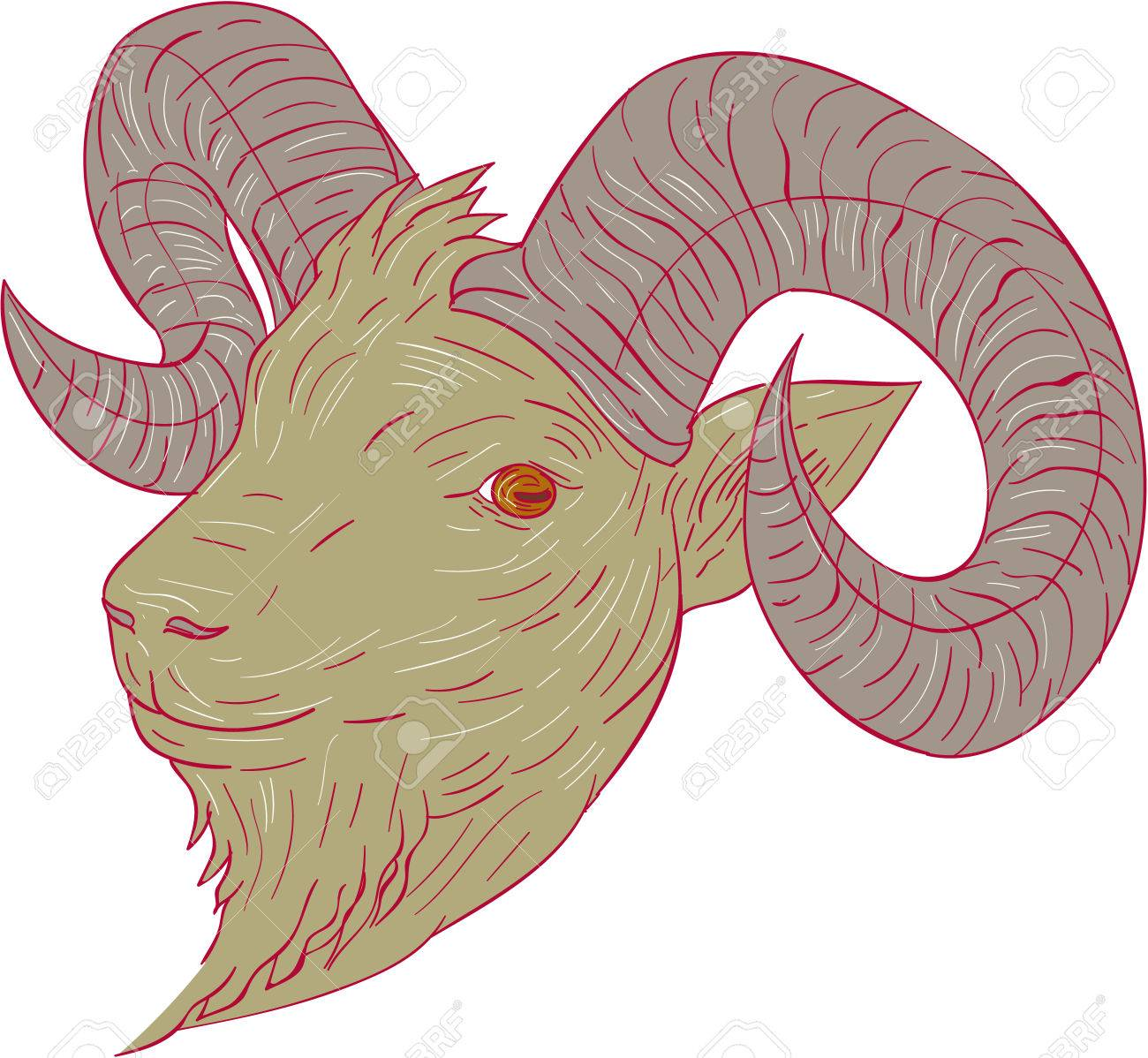 Drawing sketch style illustration of a mountain goat ram head
