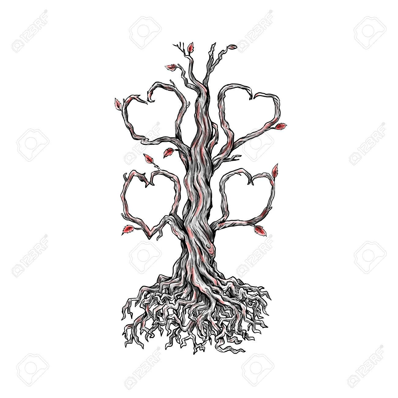 Tattoo style illustration of a gnarly old oak tree with roots tattoo style illustration of a gnarly old oak tree with roots and branches forming a heart biocorpaavc
