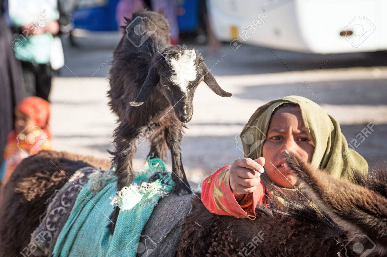 Arabic girl with goat and donkey on the local bus station near