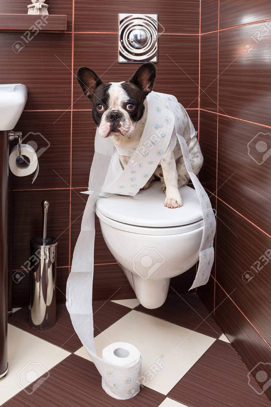 Franzosisch Bulldogge Auf Der Toilette Im Badezimmer Sitzt