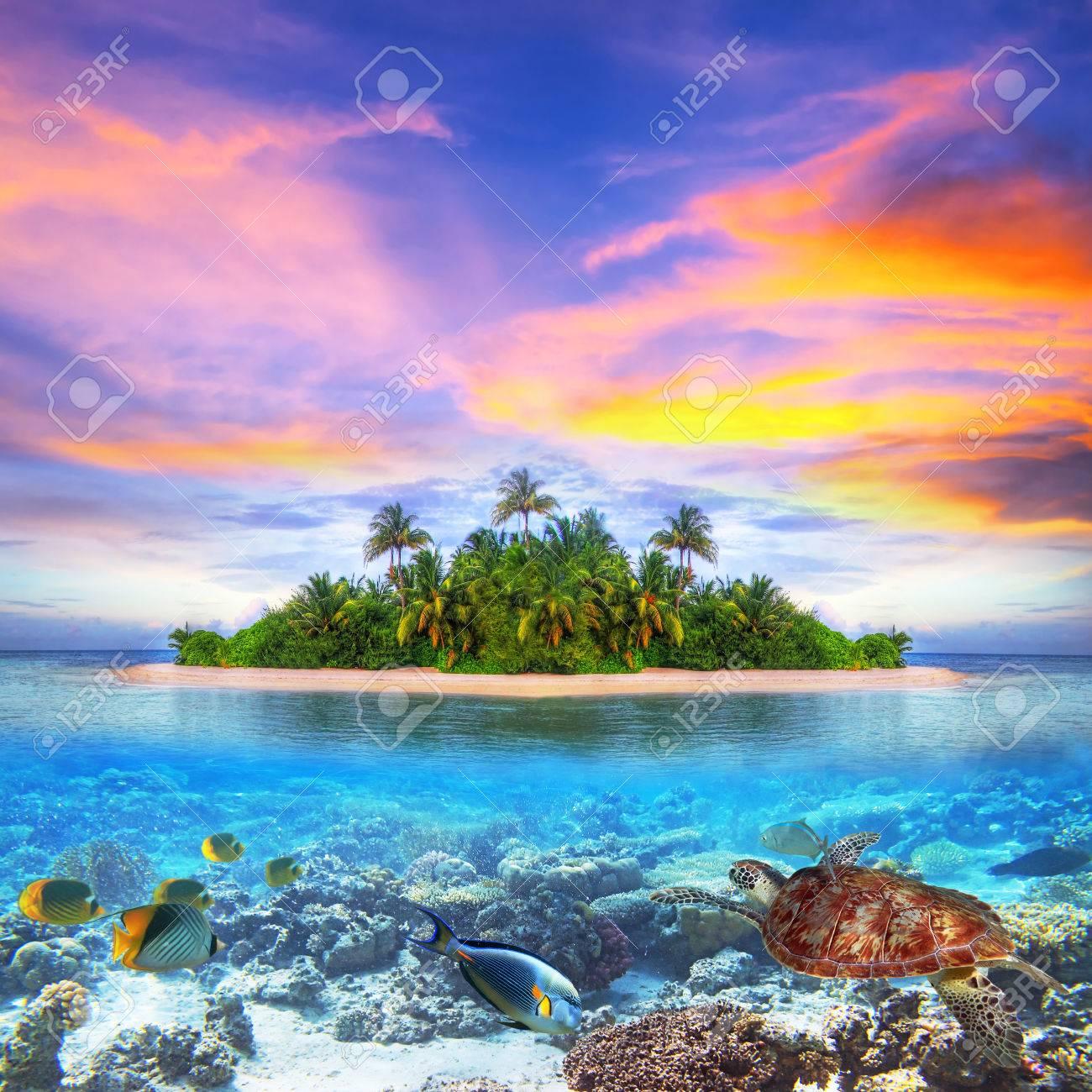 Marine life at tropical island of Maldives Stock Photo - 55104734