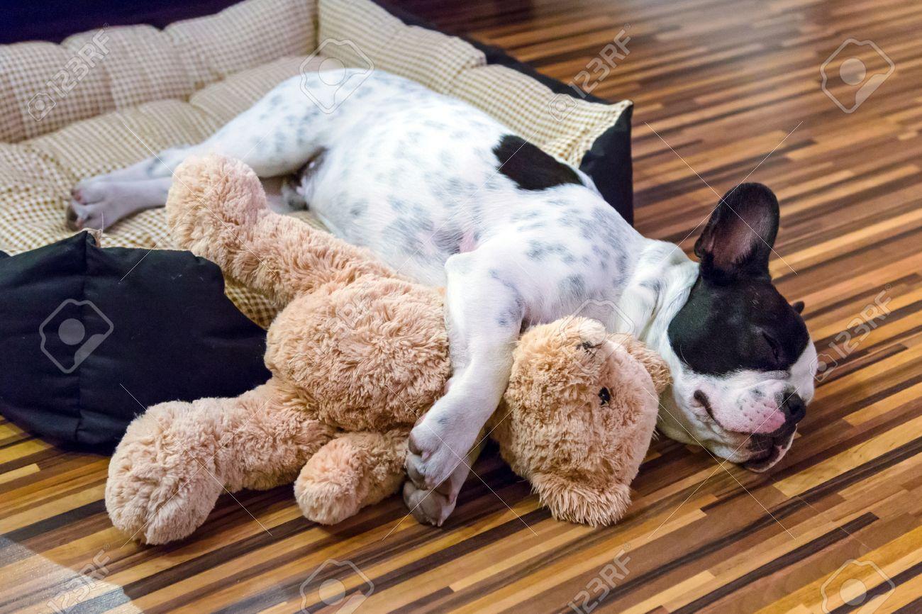 French bulldog puppy sleeping with teddy bear Stock Photo - 58440929