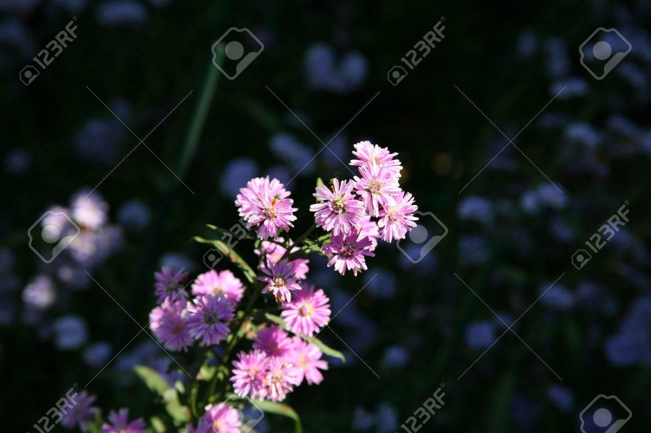 Deep pink flowers pink purple flowers in summer stock photo deep pink flowers pink purple flowers in summer stock photo 70941598 mightylinksfo