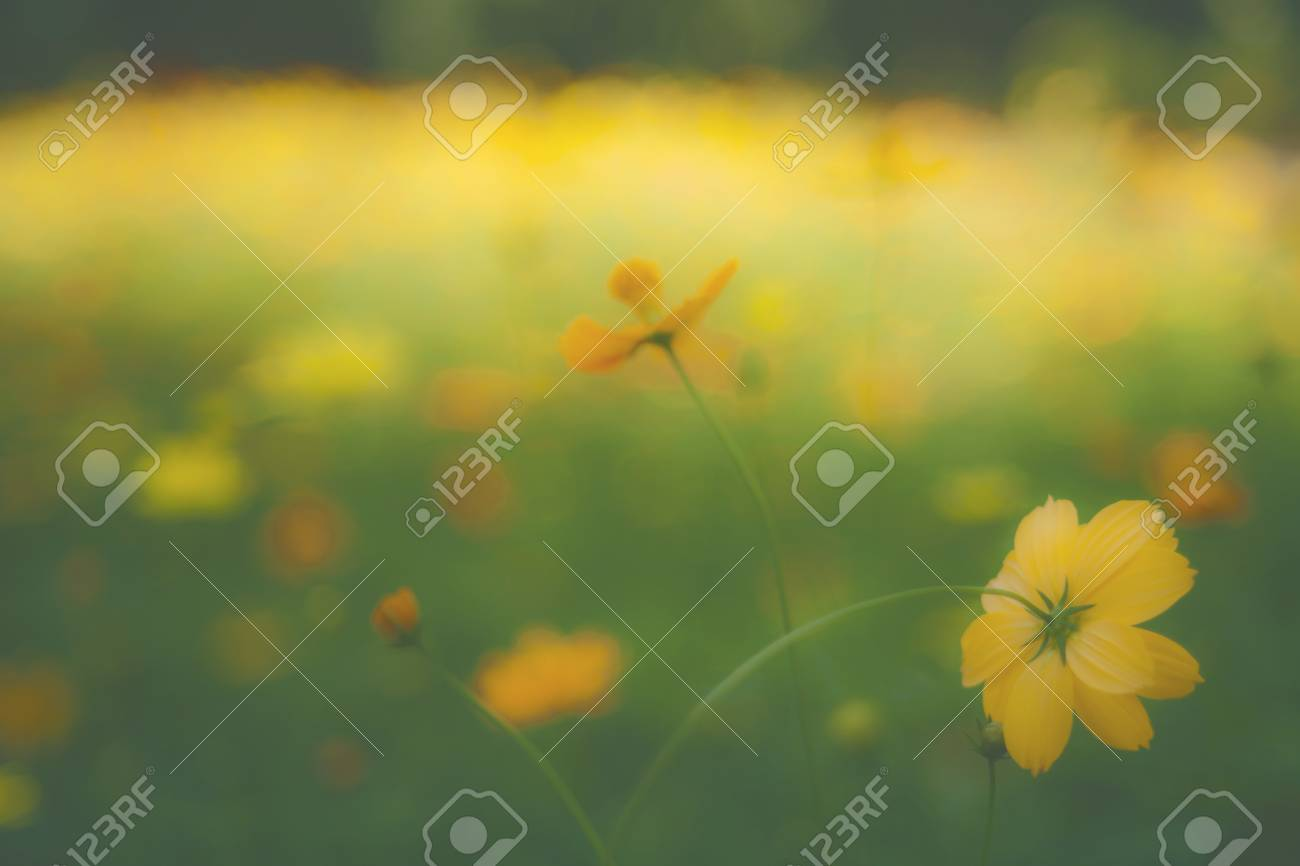 Yellow Flower Garden Tropical Flowers Film Style Stock Photo