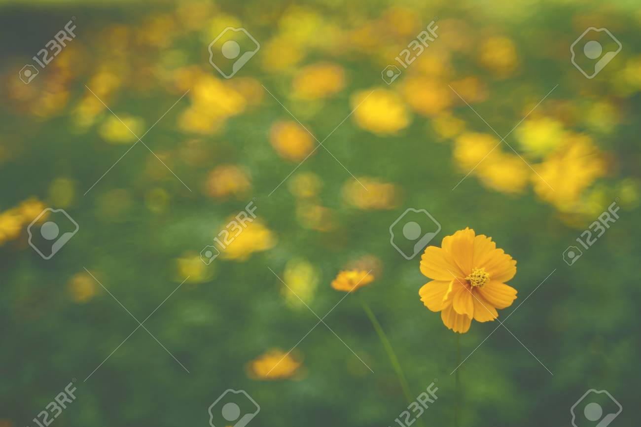 Yellow Flower Garden Tropical Flowers Film Style Photography