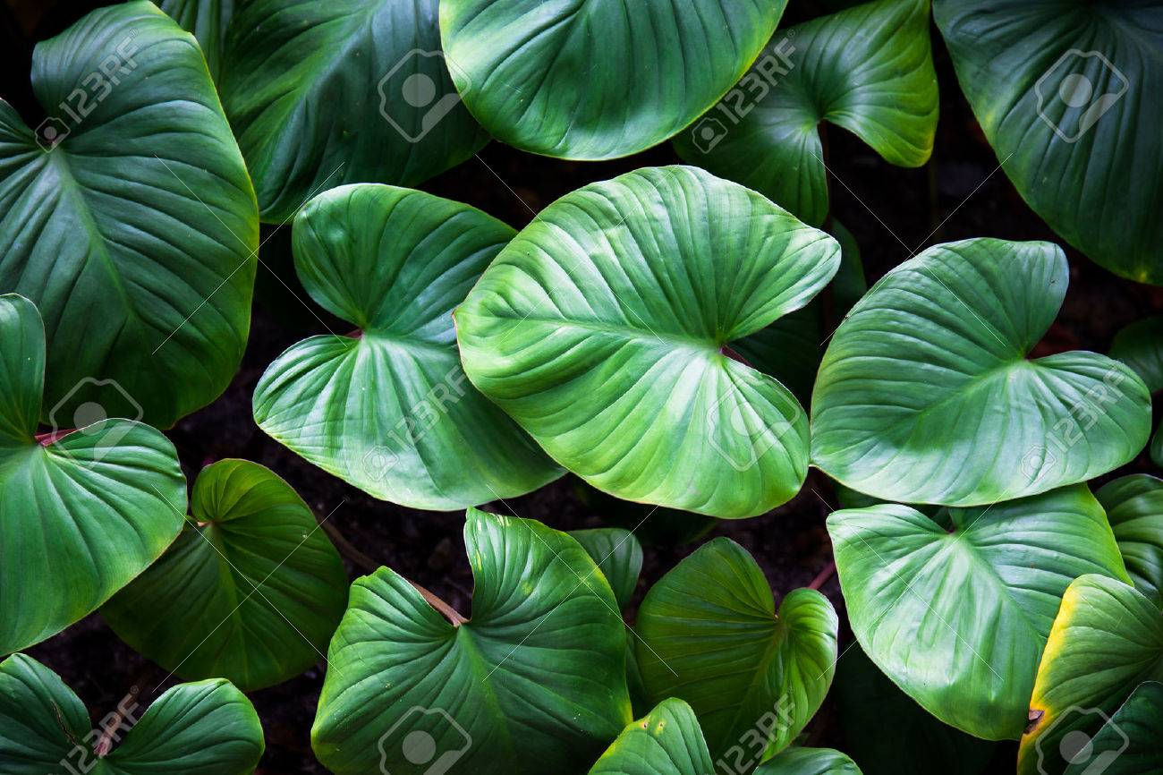 Green Plant Stock Photo Picture And Royalty Free Image Image 41757500