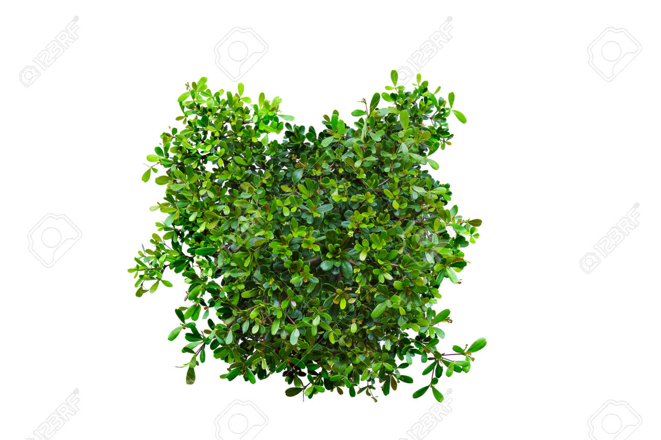 Top view of plants isolated on white background for green garden and design landscape architecture. Green fresh little plants and leaves on top view pattern. - 168691549