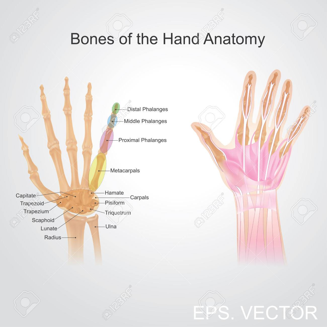 Fingers Contain Some Of The Densest Areas Of Nerve Endings On