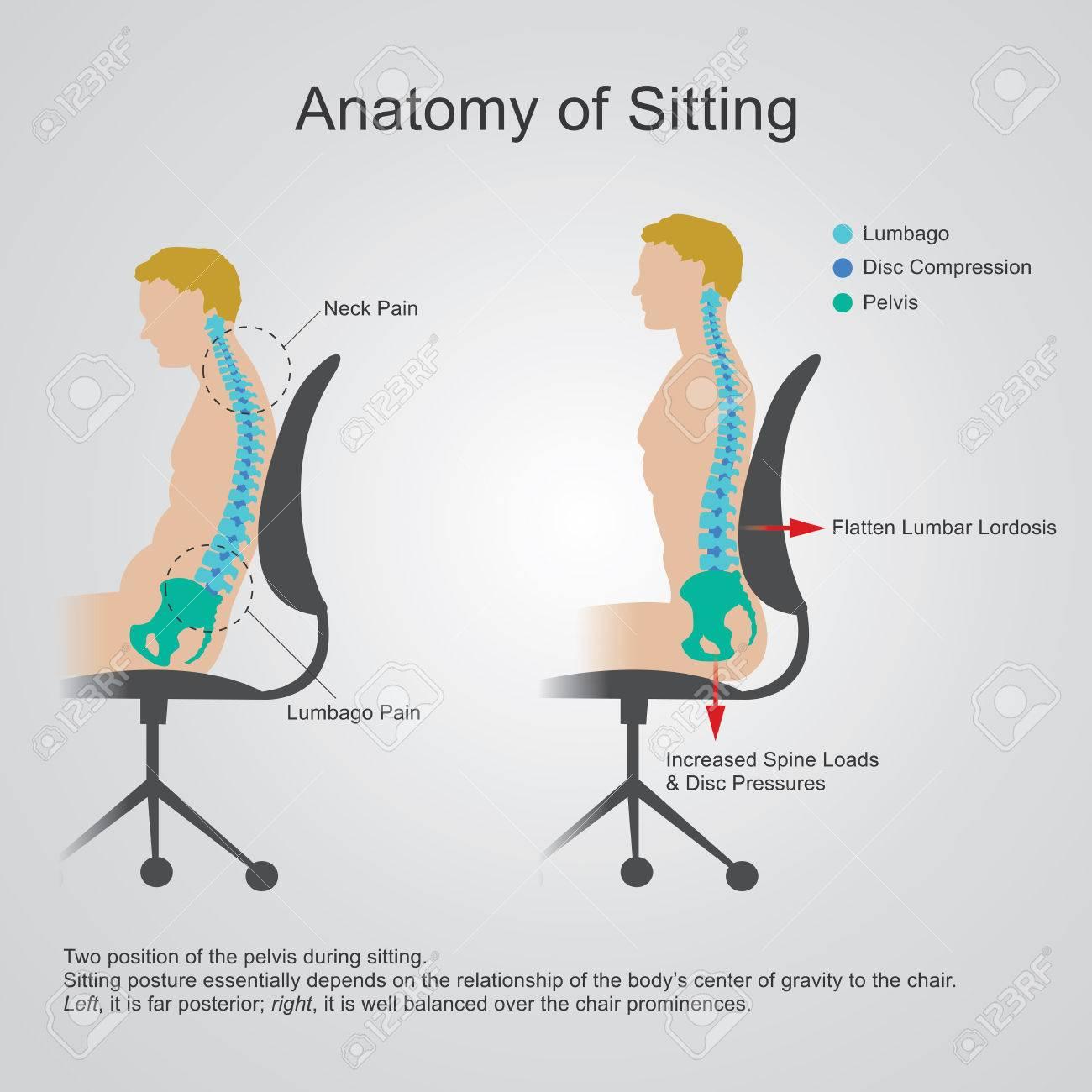 Anatomy Of SittingThe Lumbar Region Is Sometimes Referred To ...