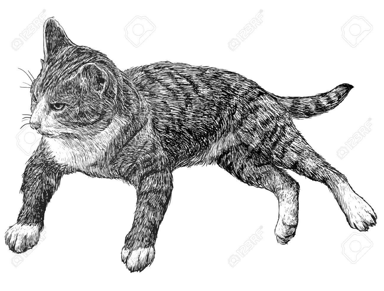 大人の猫は 白い背景の白黒イラストを描画します のイラスト素材 ベクタ Image