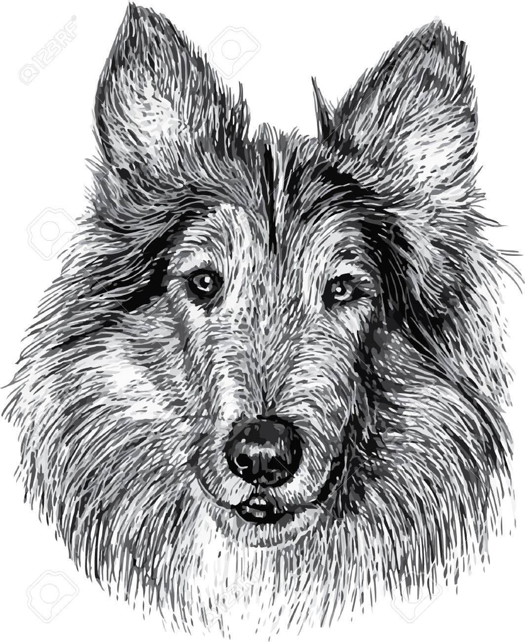 Dog head draw monochrome illustration on white background