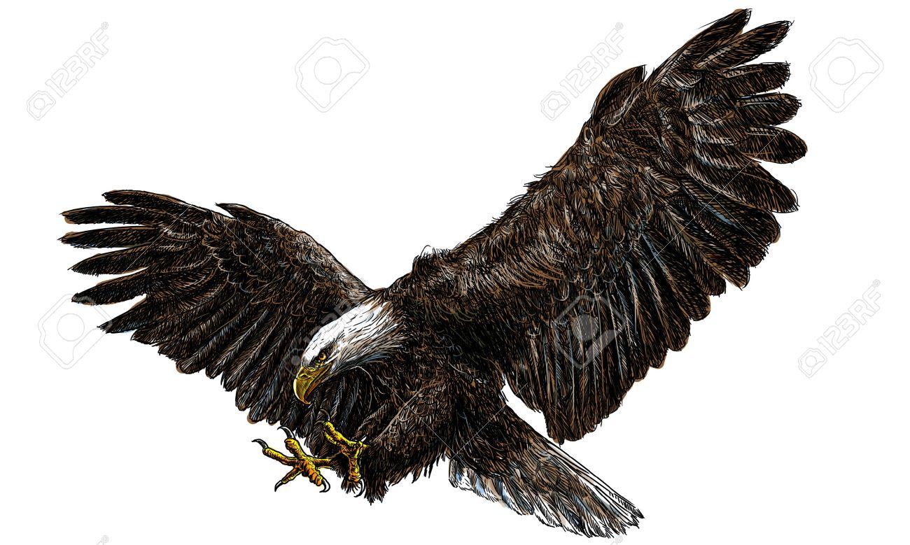 Aterrizaje De La Redada Del águila Calva Dibujar Y Pintar En El ...