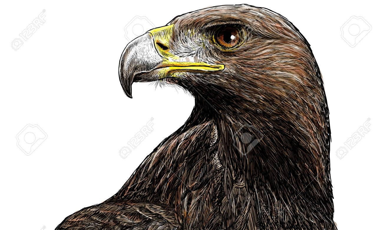 golden eagle head hand draw and paint on white background vector