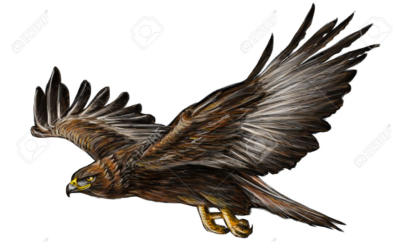 Golden eagle flying hand draw and paint on white background vector illustration. - 47212392