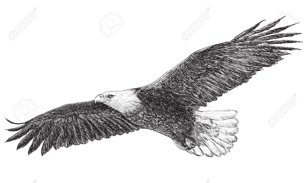 Eagle flying hand draw monochrome on white background vector illustration stock vector 47212394