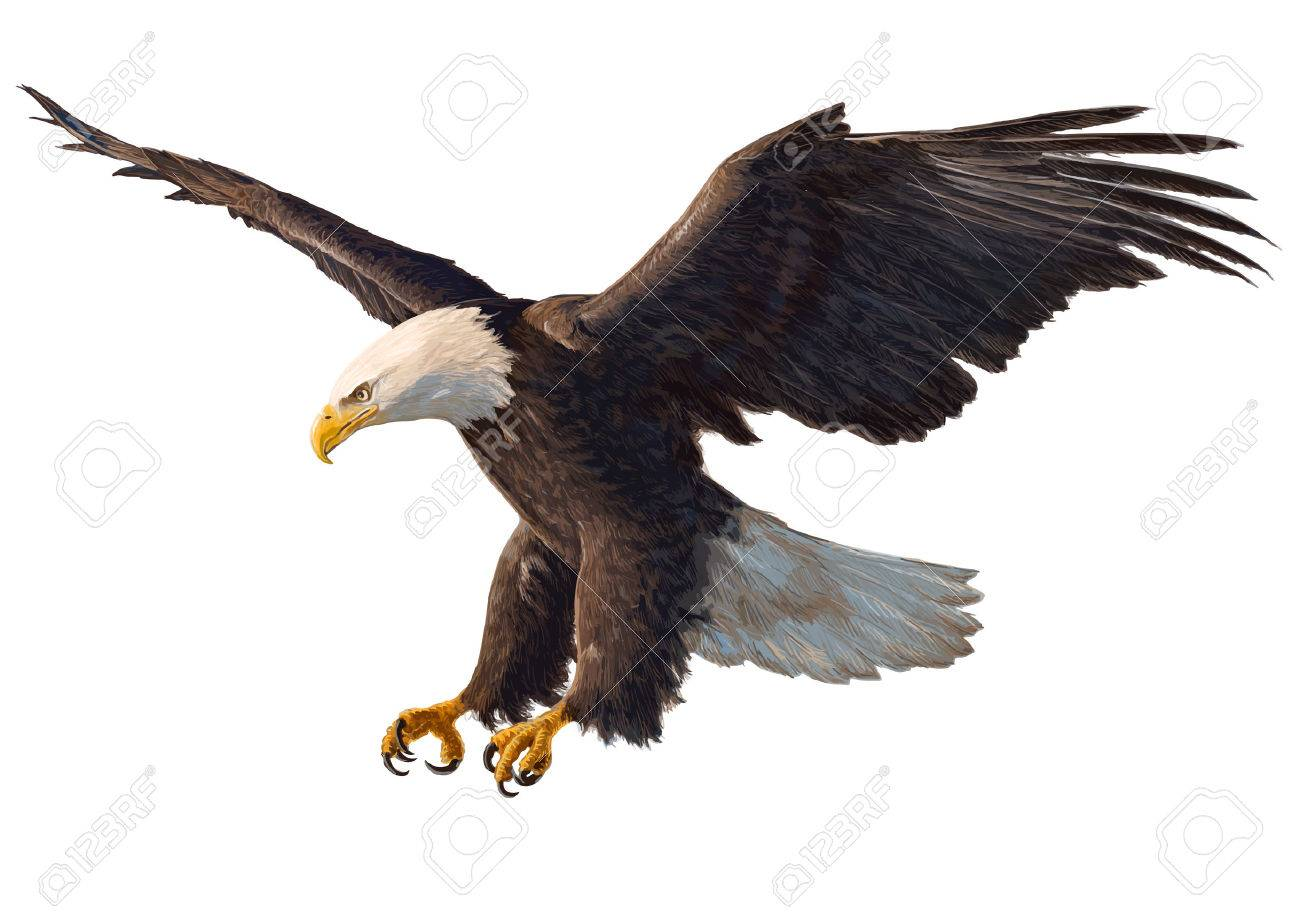 Eagle swoop hand draw and paint on white background vector illustration. - 54186310