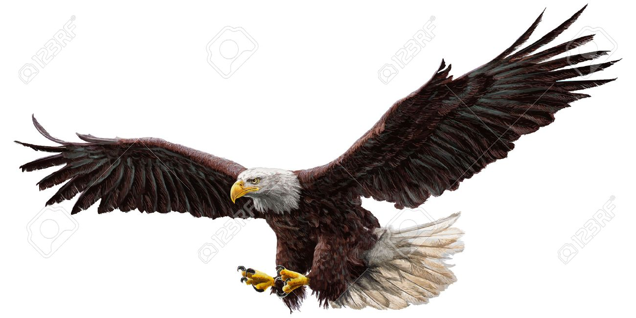 bald eagle flying hand draw and paint on white background vector rh 123rf com bald eagle outline vector bald eagle vector free download