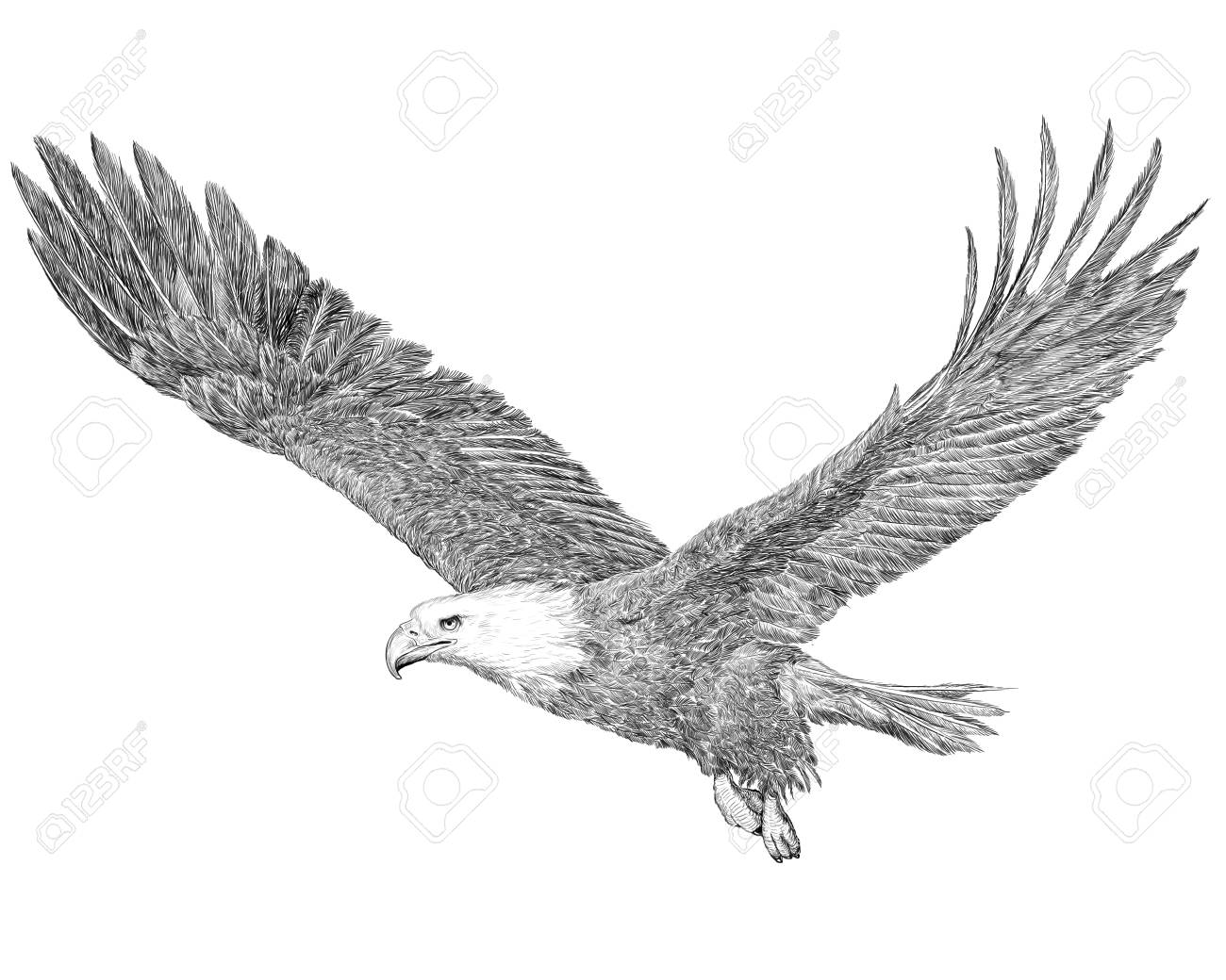 Bald eagle flying hand draw sketch black line on white background illustration stock illustration