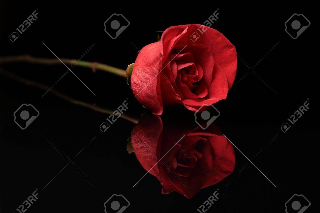 Black And Red Rose Background
