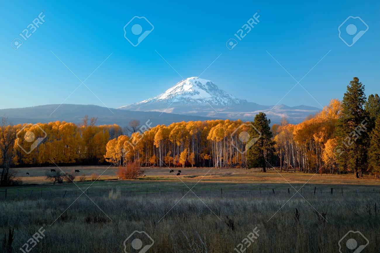Mt Adams sunset with autumn aspens - 108326957