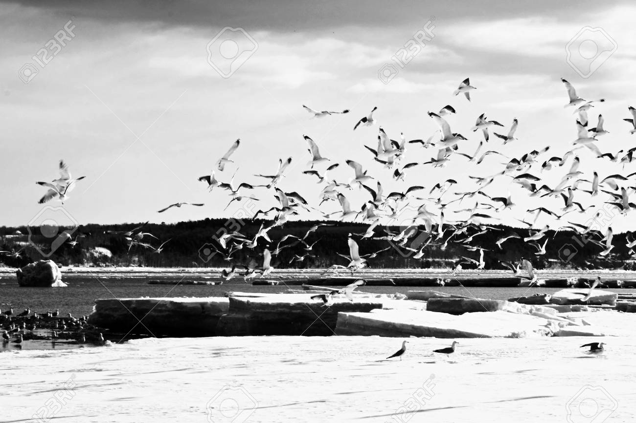 shot with motion and bird during a winter day Stock Photo - 4391920