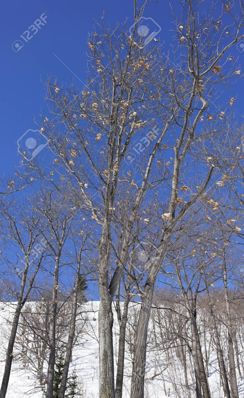 tree shot during winter with beautiful color Stock Photo - 4388414
