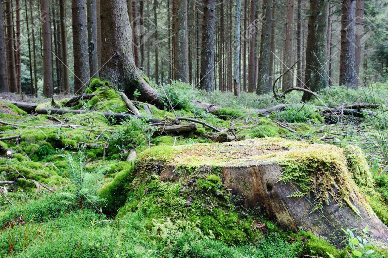 Tronco De Un Arbol Grande En El Bosque Verde De Verano Fotos Retratos Imagenes Y Fotografia De Archivo Libres De Derecho Image 14799101