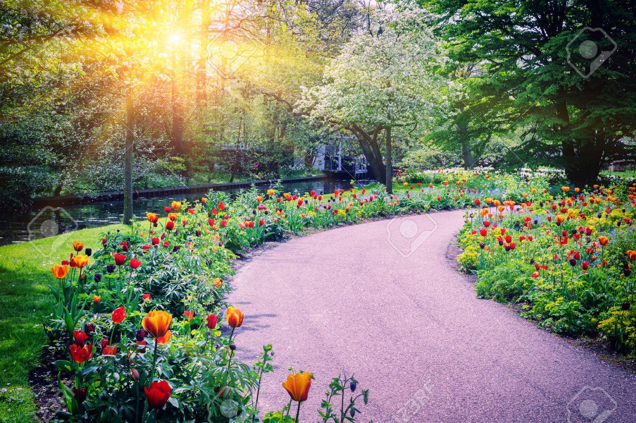 Foto De Archivo   Paisaje De Primavera Con Coloridos Tulipanes. Jardín De  Keukenhof, Países Bajos
