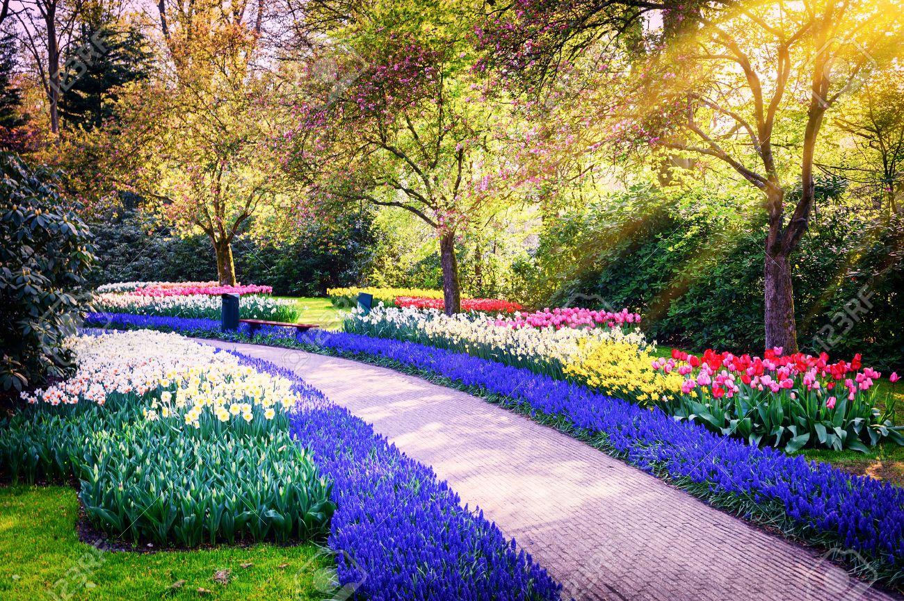 Paysage de printemps avec des fleurs colorées. Keukenhof jardin, Pays,Bas  Banque d