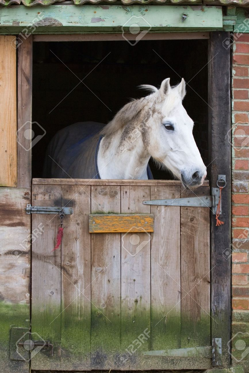 White Horse Behind A Wooden Stable Door Stock Photo Picture And Royalty Free Image Image 4405679
