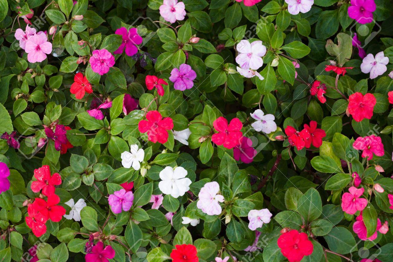 Closeup Of A Flower Bed With Red Purple Pink And White Flowers