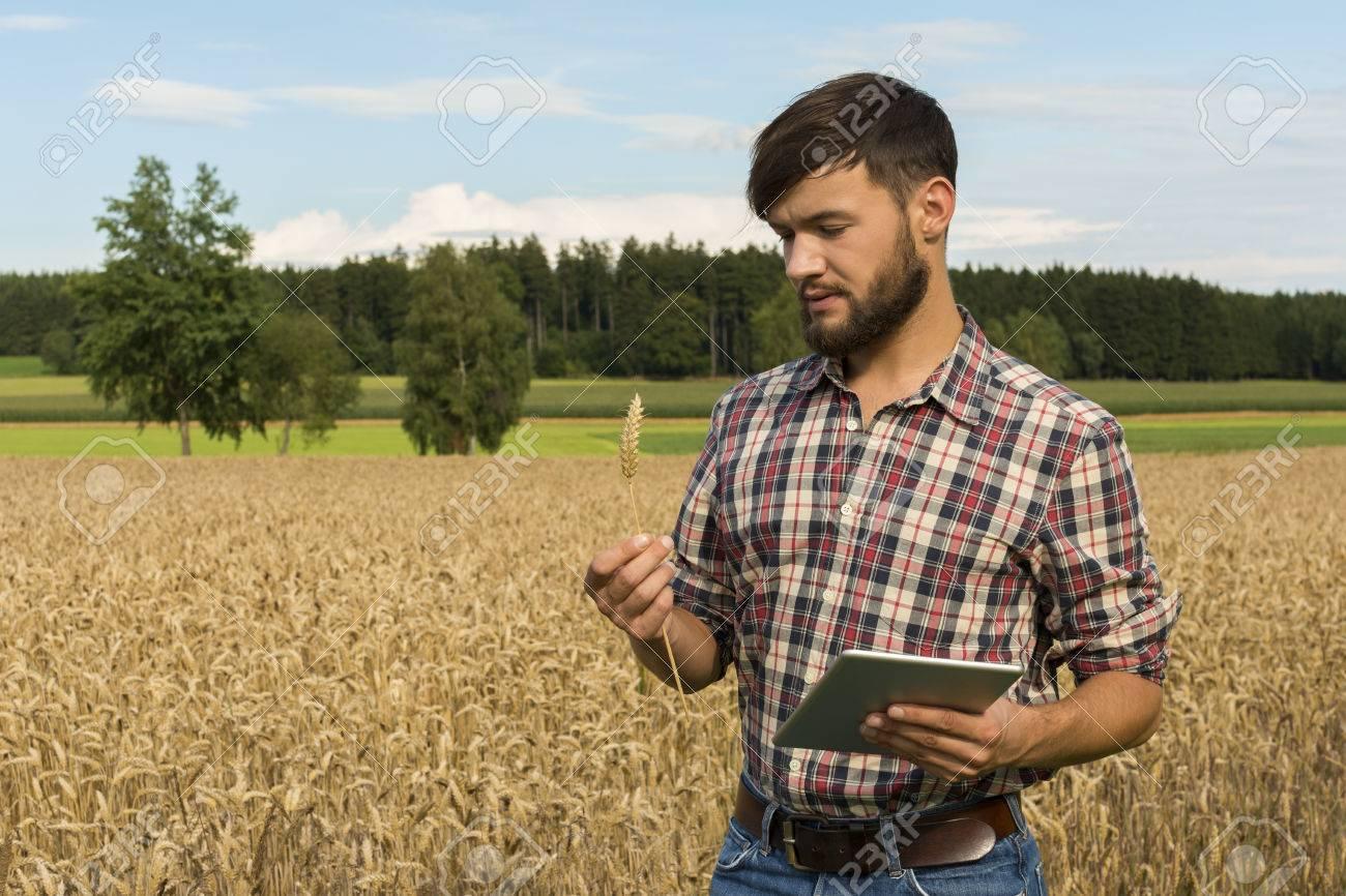 Junger landwirt bei der arbeit  Junger Landwirt Mit Tablet Inspektion Ernte, Außenaufnahme ...