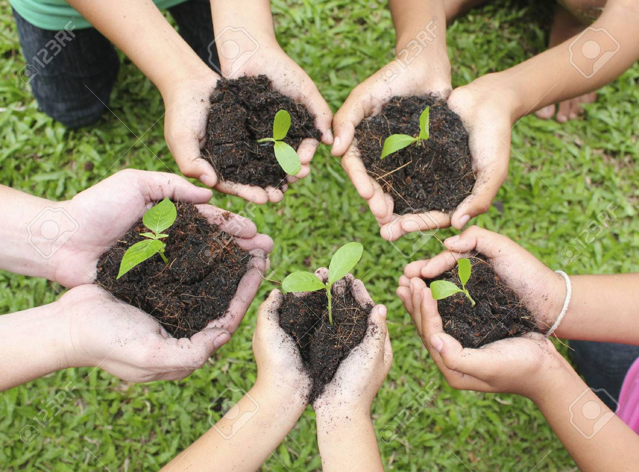 Hands holding sapling in soil surface - 51868113