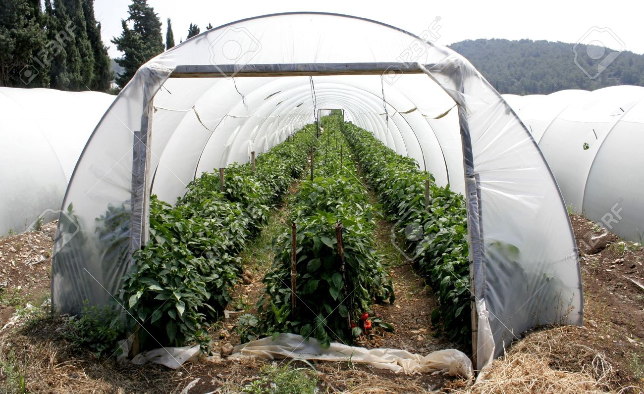 tunnel shaped plastic greenhouse Stock Photo - 3998102