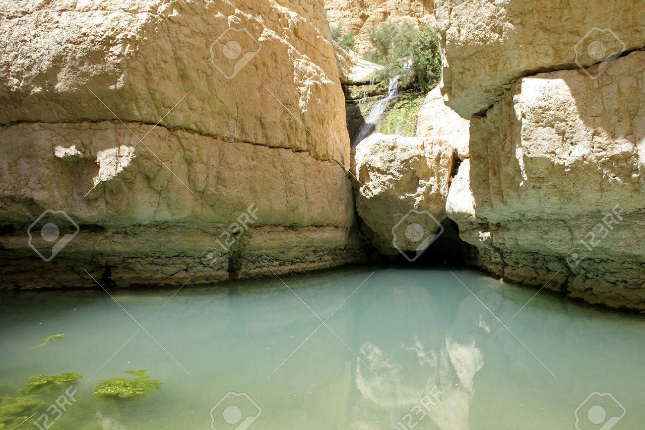 desert oasis in the dead sea region Stock Photo - 3930829
