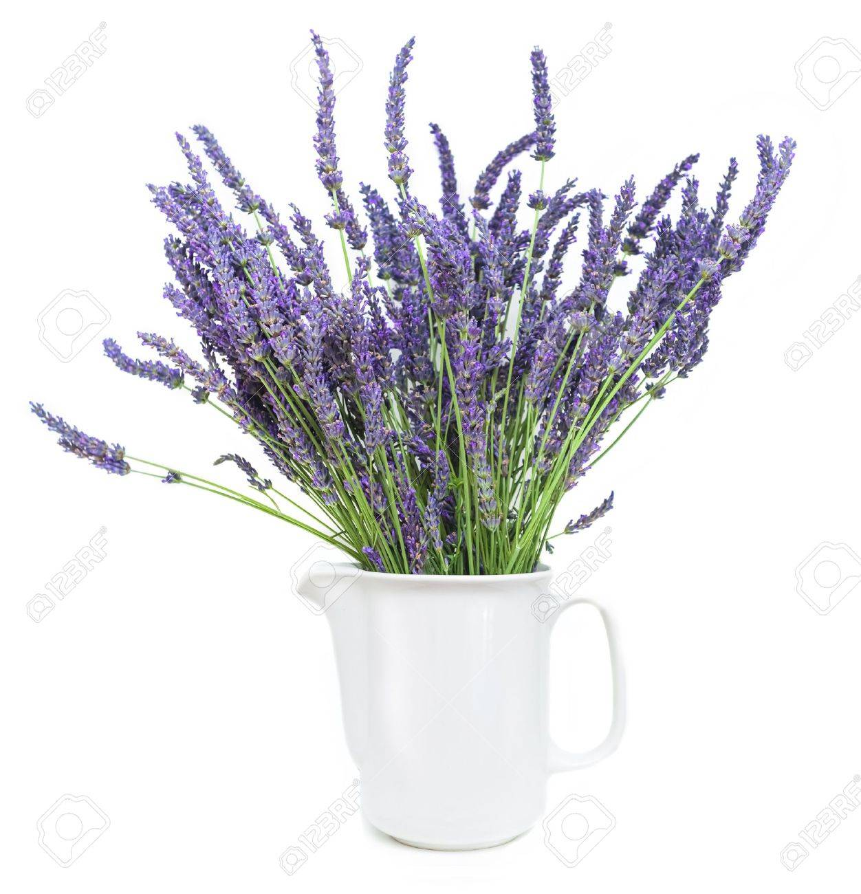 19118845-lavender-Stock-Photo-lavender-pot-plant.jpg