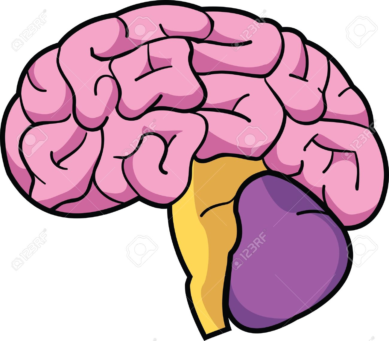 A colorful cartoon depiction of a human brain. Stock Vector - 9558157