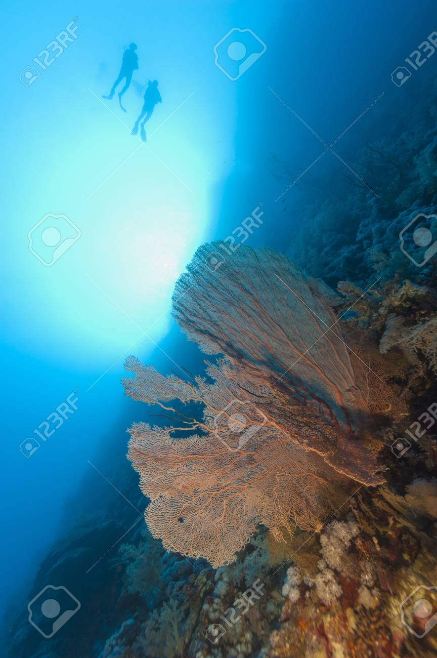 Two scuba divers exploring an underwater tropical coral reef wall with gorgonian fan in the sun Stock Photo - 16303472