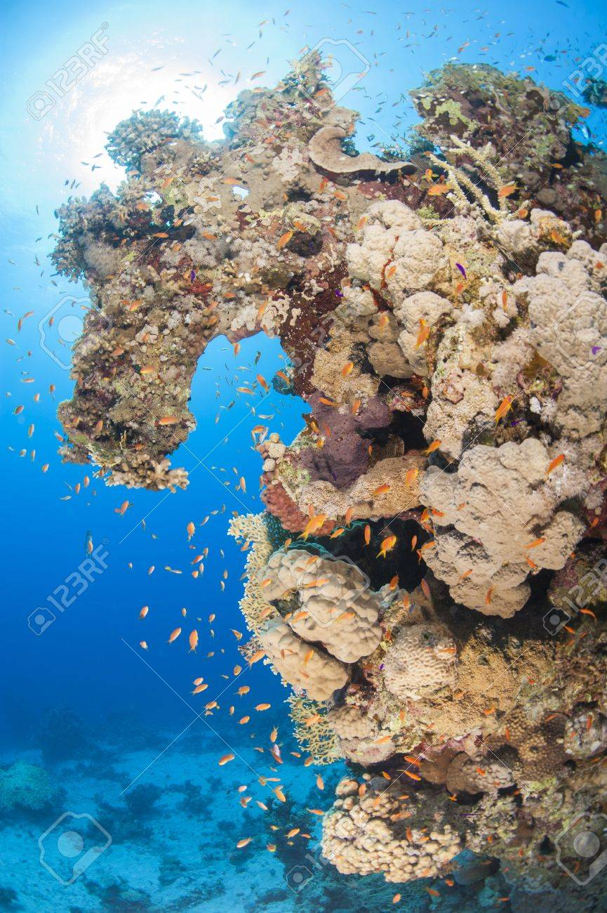 Stunning underwater tropical coral reef landscape scene with shoal of anthias fish Stock Photo - 20420096