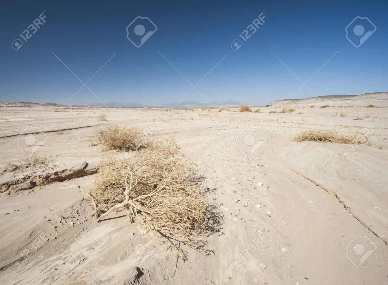 エジプトの荒涼とした不毛の東部...