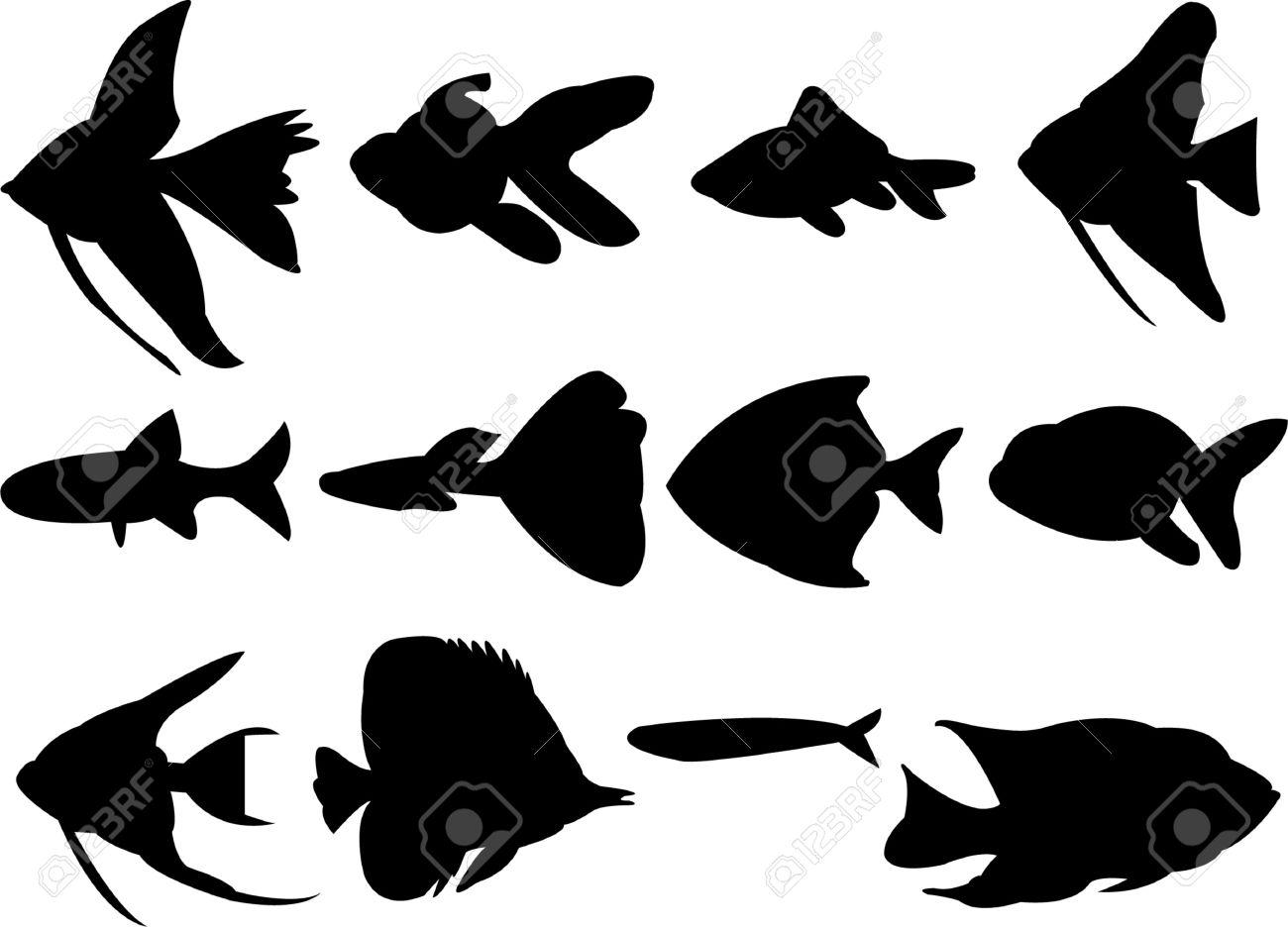 acquario e pesci affinità di coppia: oroscopo un animale guida per ... - Acquario Ascendente Pesci Affinità