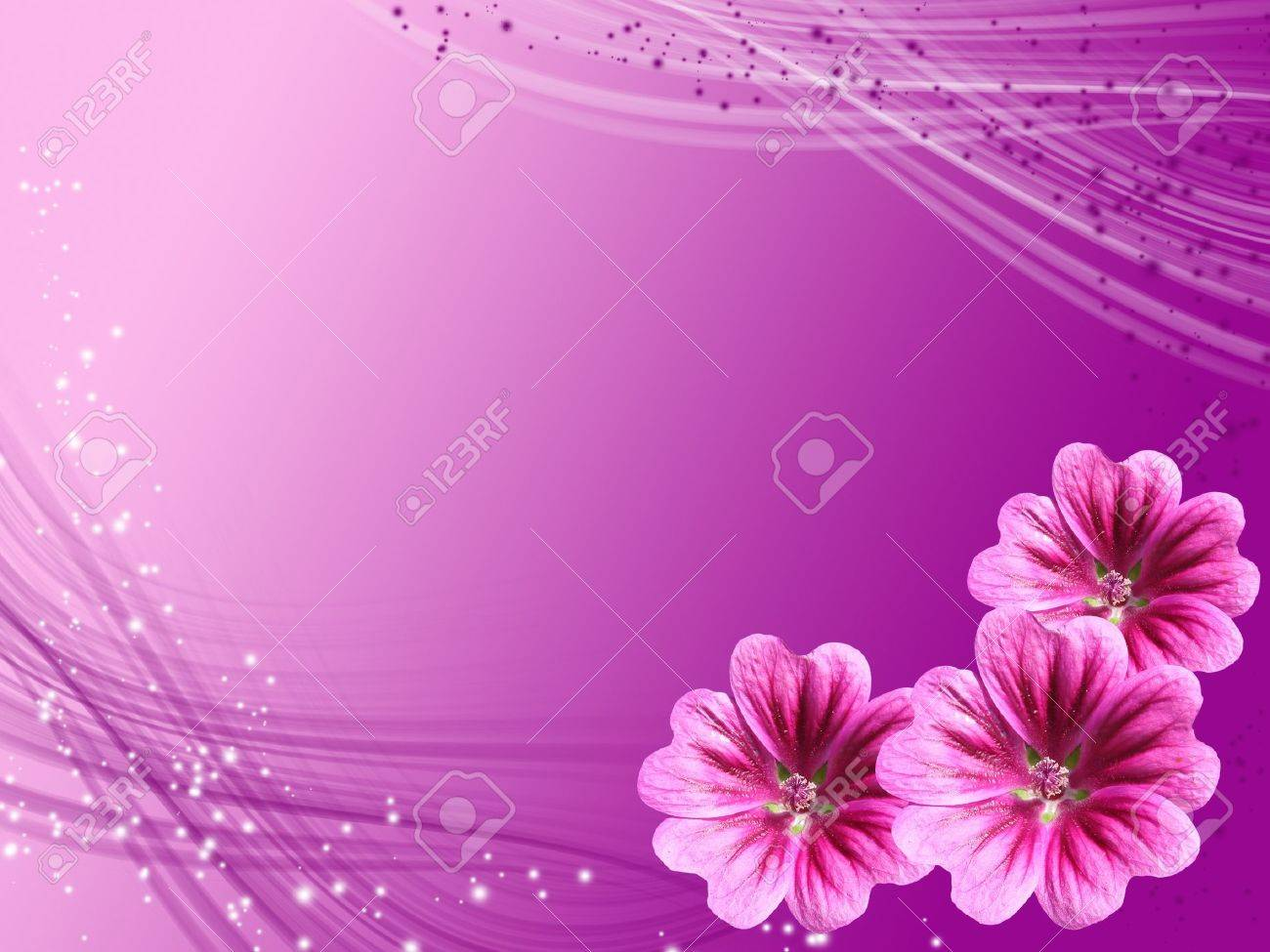 violet card with flowers hollyhock Stock Photo - 8492263