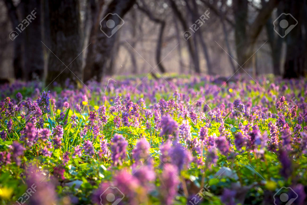 Nice flower meadow in forest in spring time - 121050435
