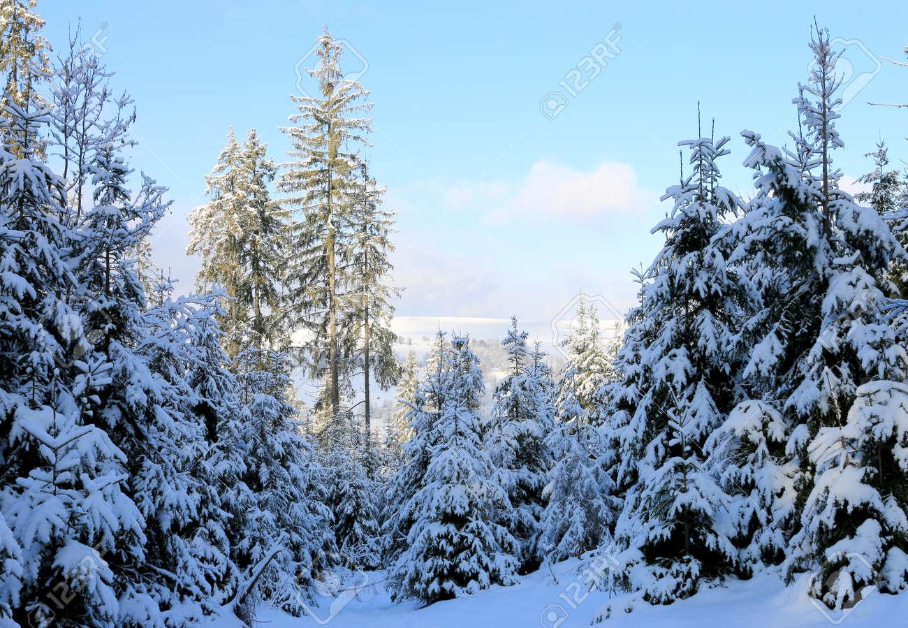 winter scene in Carpathian forest, Ukraine - 165451680