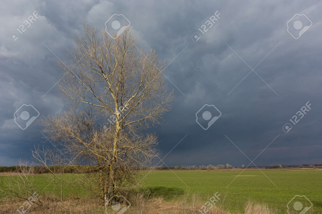 Alone leafless tree on green farmig field under heavy stormy clouds in sky - 167479692