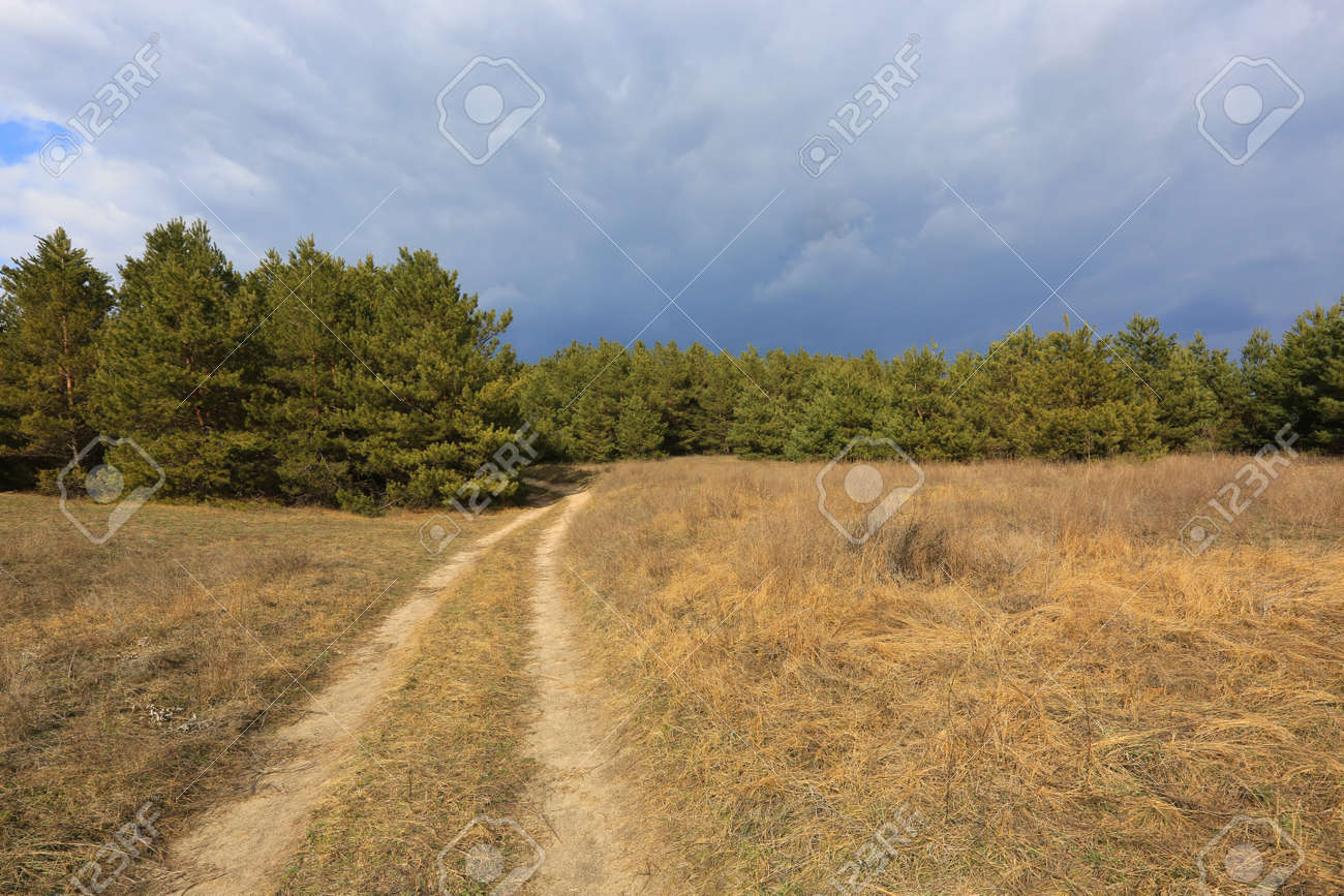 pathway across meadow in spring forest - 167479628