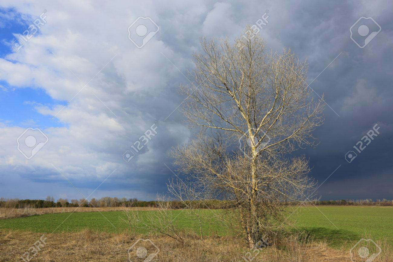 leafless tree on green farmig field before spring thunderstorm - 167478832